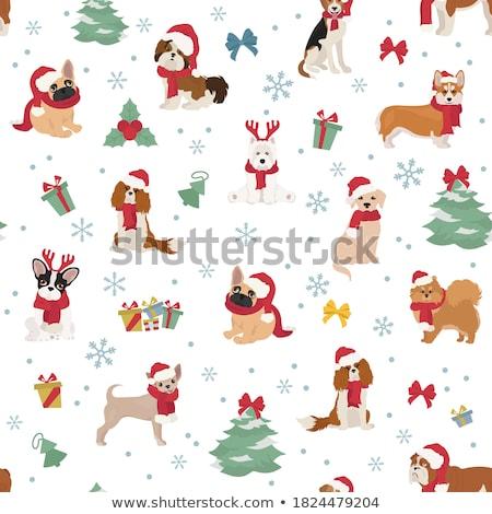 cachorro · seis · bonitinho · pequeno · havanese · em · pé - foto stock © feedough
