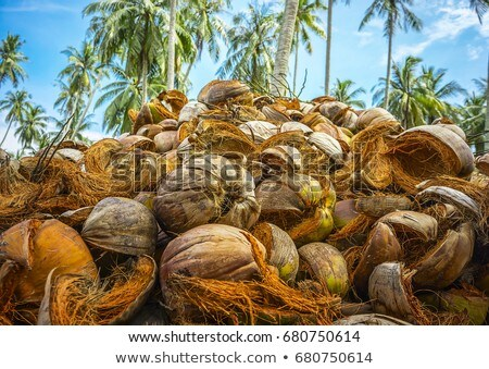 Pile of discarded coconut husks Stock photo © michaklootwijk