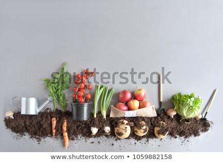 Creciente hortalizas campo cubierto plástico paisaje Foto stock © manfredxy