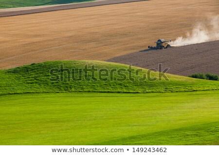 Ekili alanları golf sahası hasat alan Stok fotoğraf © CaptureLight