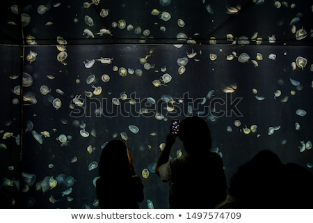 people watch the jelly fishes in the aquarium Stock photo © meinzahn