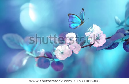 borboleta · azul · flores · campo - foto stock © kimmit
