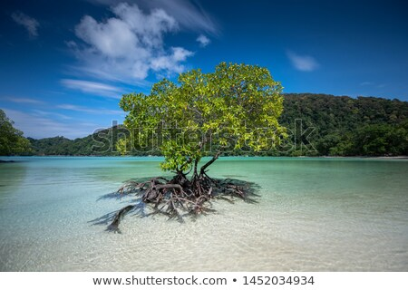 Beautiful mangrove tree growing in the sea Stock photo © smithore