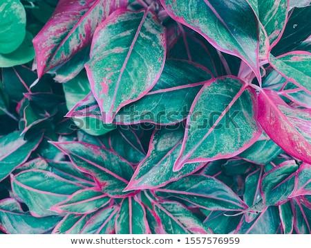 wektora · bezszwowy · bambusa · tapety · tekstury · drzewo - zdjęcia stock © zebra-finch