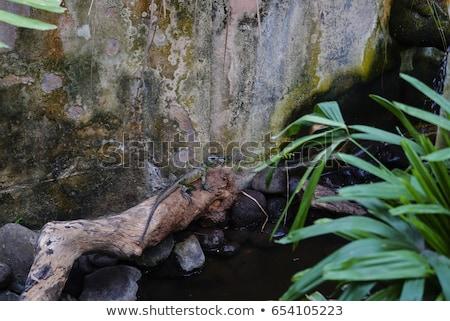 kegyetlenség · állatok · kutya · kezek · fogak · verekedés - stock fotó © meinzahn