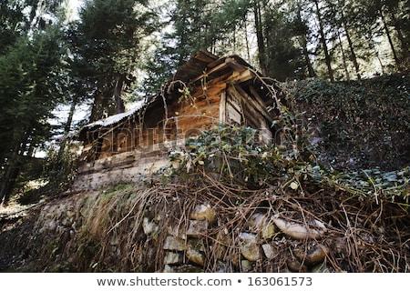 Hut in a forest, Manali, Himachal Pradesh, India Stock photo © imagedb