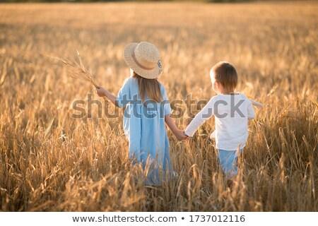 Fivér lánytestvér búzamező szeretet természet jókedv Stock fotó © IS2