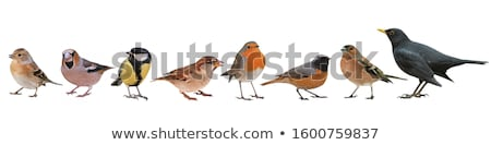a set of wild bird on white background stock photo © bluering