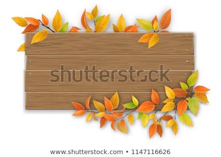 vallen · iep · esdoorn · bladeren · vector - stockfoto © artspace