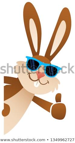 bonitinho · engraçado · sol · óculos · de · sol · cara · olhos - foto stock © krisdog