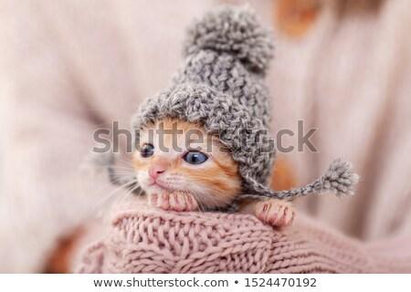 Cute imbir kotek kobieta ręce Zdjęcia stock © ilona75