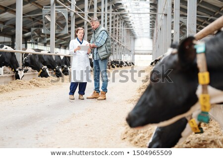 Young female worker of large farmhouse showing her colleague online information Stock photo © pressmaster