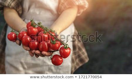 Hand holding cherry tomatos  Stock photo © deyangeorgiev