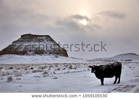Saskatchewan grande fangoso cielo blu natura Foto d'archivio © pictureguy