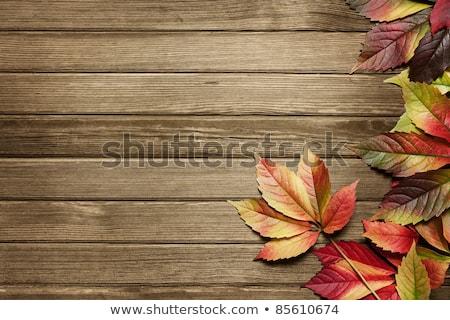 Autumn leaves on wooden background Stock photo © stevanovicigor
