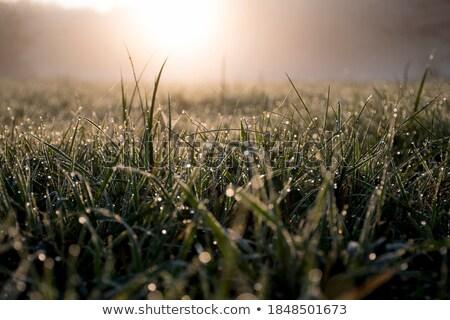 Damla çiy yaprak gündoğumu güneş Stok fotoğraf © pashabo