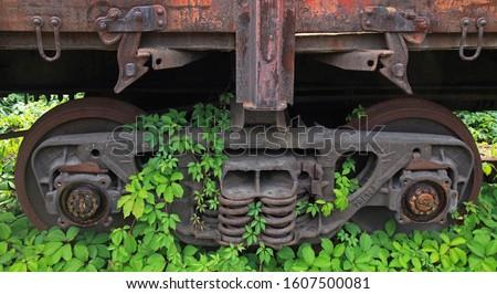 Stock photo: Overgrown vineyard