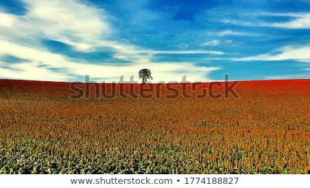 背景 工場 農業 穀物 食事 成長 ストックフォト © dinozzaver