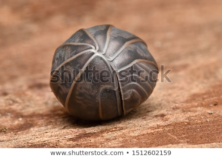 fossile · insecte · ailes · jambes · Rock · shell - photo stock © pxhidalgo