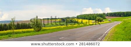 Verde campi panorama asfalto albero Foto d'archivio © olandsfokus