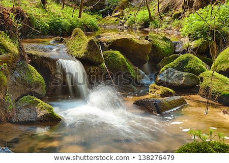 River runs over boulders in the primeval forest Stock photo © hanusst