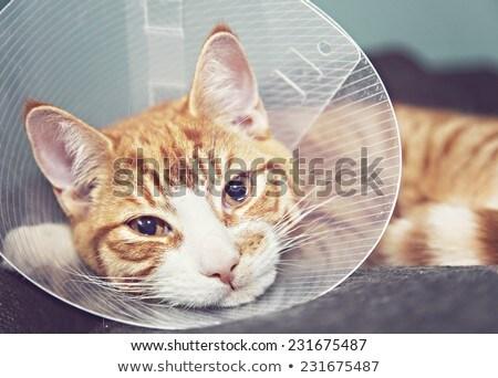 Gewond kat vrouw kantoor handen Stockfoto © wavebreak_media