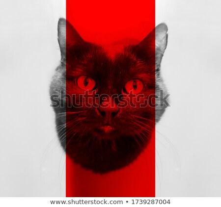 Aranyos torkolat fekete macska piros szemek közelkép Stock fotó © vlad_star
