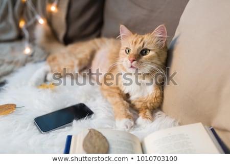 Piros macska kanapé otthon díszállatok karácsony Stock fotó © dolgachov