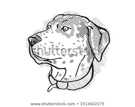 Stockfoto: Catahoula Leopoard Dog Breed Cartoon Retro Drawing