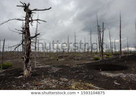 Panorama morti foresta montagna altezza Foto d'archivio © olira