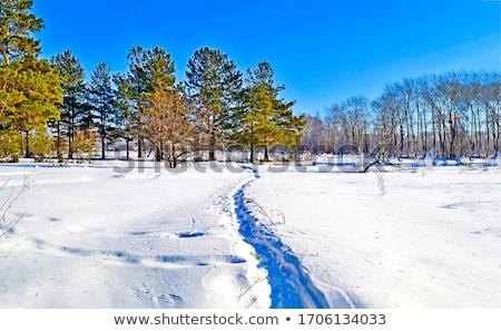 Kar yol dondurulmuş park güneş arka ışık Stok fotoğraf © michey