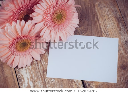 blank card with gerber flower Stock photo © chesterf