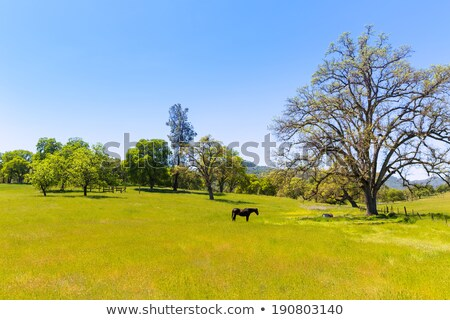 cavalo · paisagem · cavalos · nuvens · grama · natureza - foto stock © lunamarina