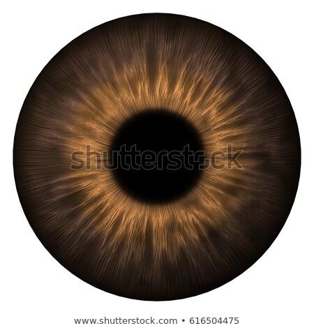 коричневый · Iris · подробный · человека - Сток-фото © magann