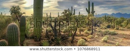 Arizona pustyni flora krajobraz Zdjęcia stock © emattil
