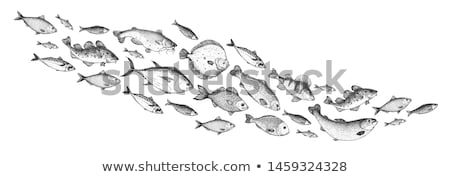 artístico · peixe · ilustrado · cartão · moda - foto stock © kiddaikiddee