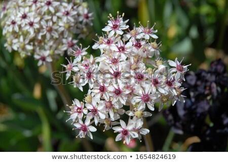 fehér · díszítő · virágok · virág · részlet · szirmok - stock fotó © alessandrozocc