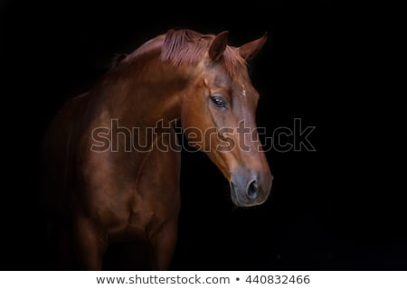 bruin · paard · permanente · straat · stedelijke - stockfoto © rhamm