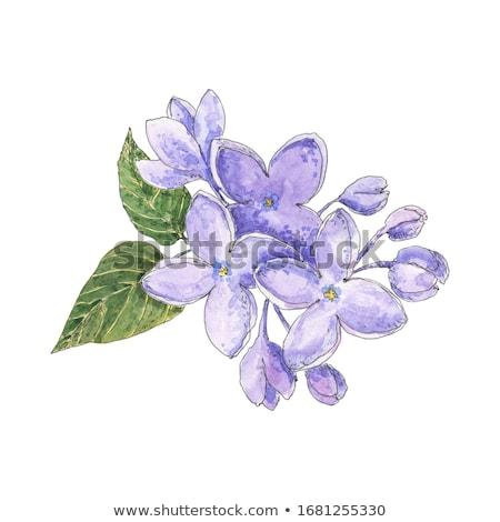 gyönyörű · tavasz · orgona · zöld · levelek · virágok · természet - stock fotó © mady70