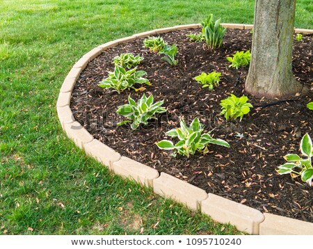 Mulched flowerbed in a neatly manicured green lawn Stock photo © ozgur