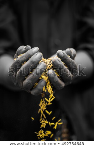 hand · rijst · graan · voorraad · foto - stockfoto © nalinratphi