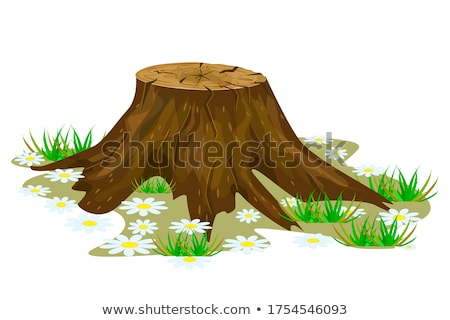 a log and tree stumps stock photo © bluering