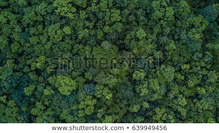 An aerial view of a green plant Stock photo © bluering