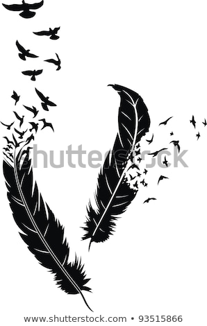 Birds feather Stock photo © bbbar
