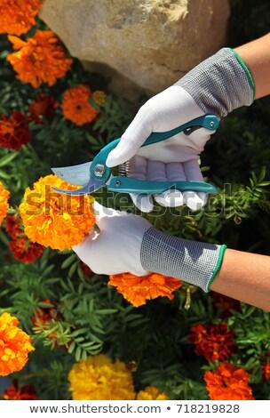 ножницы · работник · зеленый · весны · природы - Сток-фото © ssuaphoto