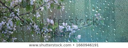 весенние цветы дождь капли поляна гор Сток-фото © Kotenko