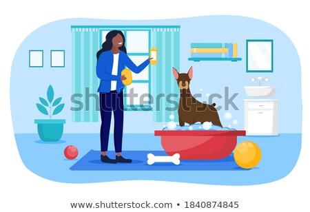 köpek · banyo · örnek · boğa · dijital - stok fotoğraf © cthoman