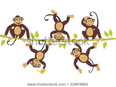 Set of monkey hanging on vine Stock photo © colematt