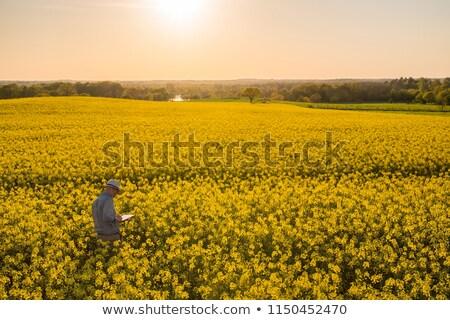フィールド 日没 美しい 木 ストックフォト © fyletto