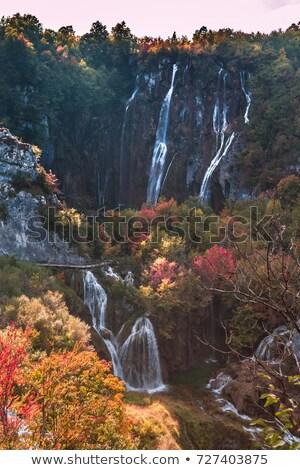 Kleurrijk najaar gras hout bos licht Stockfoto © EwaStudio